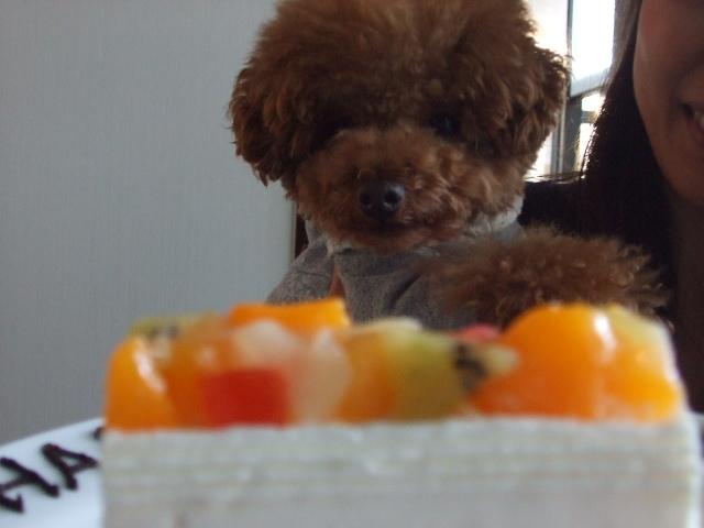 シフォン 2歳.JPG