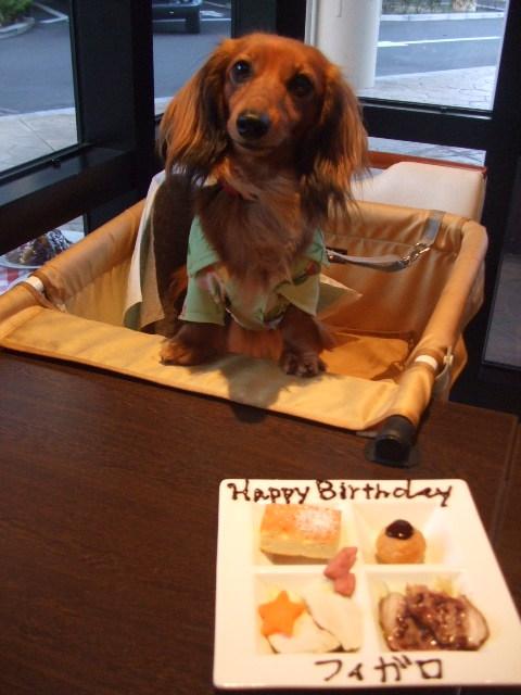 フィガロ 4歳.JPG