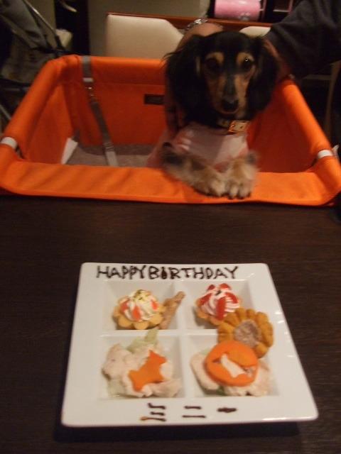 ミニー 1歳.JPG