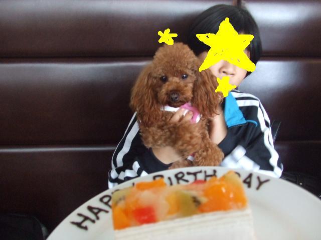 ミラ 2歳.JPG